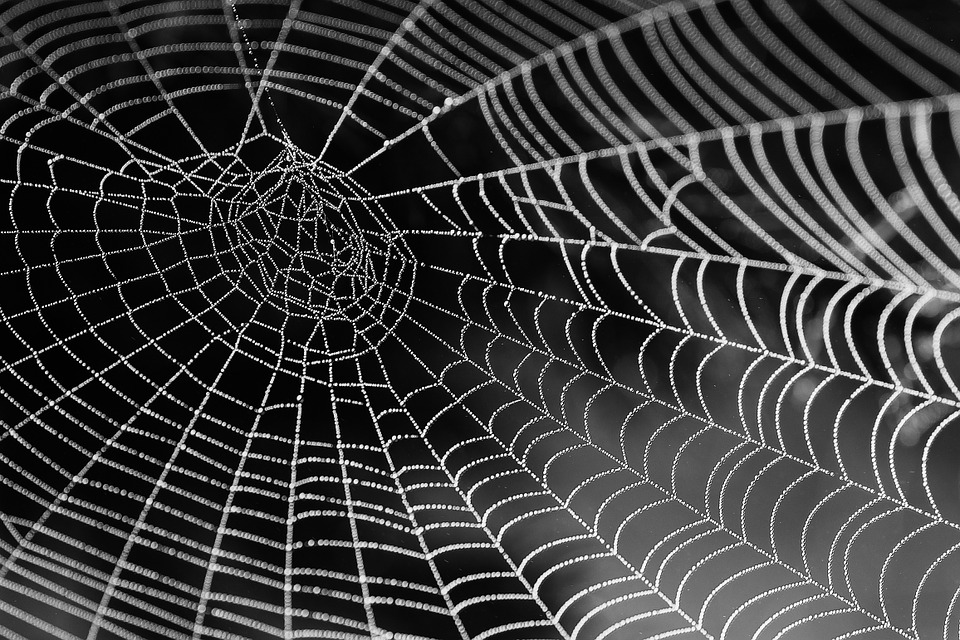 Spider Web with Water Beads